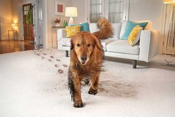 Keep Your Family and Pets Healthy in a Cleaner Home